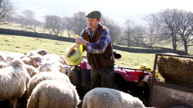 farmer feeding the sheep - farmer hay stock videos & royalty-free footage