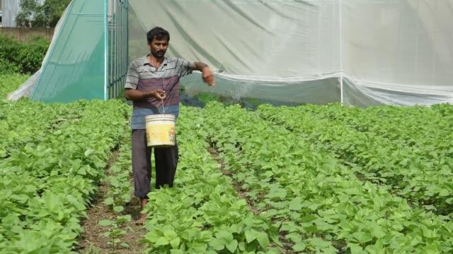 farmer give fertilizer to soybean plants. - organic farm stock videos & royalty-free footage
