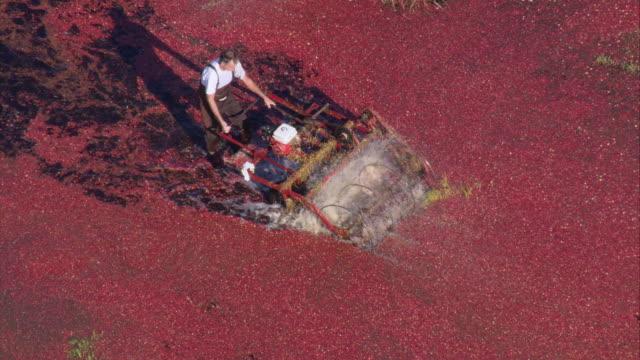 AERIAL Farmer harvesting cranberries / Wareham, Massachusetts, United States