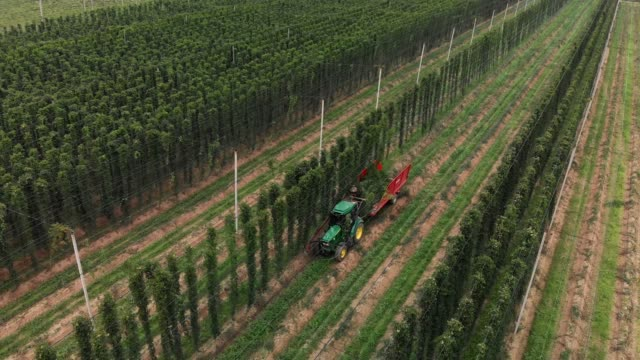 Farmer harvesting hops field with tractor