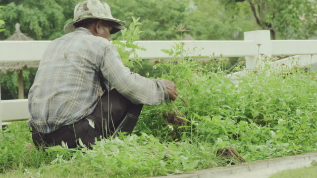 farmer harvesting organic vegetables at home. - choosing stock videos and b-roll footage
