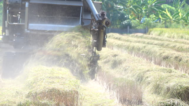 farmer harvesting rice crops using a machine - hay field stock videos & royalty-free footage