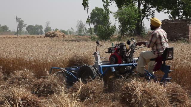 farmer harvesting wheat crops with a combine harvester - punjab region stock-videos und b-roll-filmmaterial