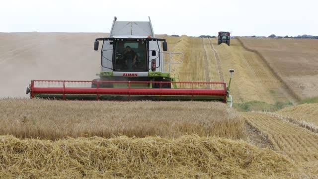 a farmer harvesting wheat on a farm near barmston east coast yorkshire uk - cereal plant stock videos & royalty-free footage