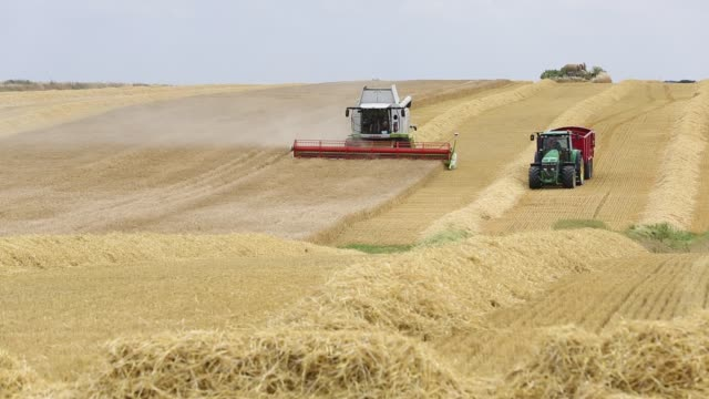 farmer harvesting wheat on a farm near barmston, east coast, yorkshire, uk. - wheat stock videos & royalty-free footage