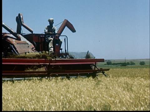 vidéos et rushes de ws, cu, farmer harvesting wheat with combine, 1950's, oklahoma, usa - récolter