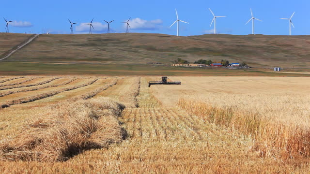 farmer harvesting wheatfield - alberta stock videos & royalty-free footage