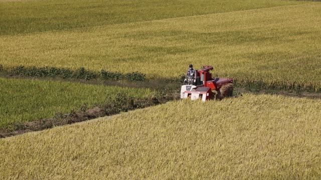 a farmer harvests rice with a daedong industrial co dsm65 combine harvester in a paddy field in hadong south korea on thursday oct 09 a combine... - agricultural cooperative stock videos and b-roll footage