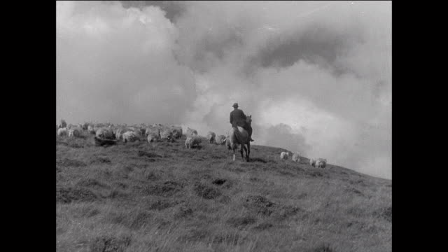 montage farmer herding flock of sheep to farm / aberystwyth, wales - herding stock videos & royalty-free footage