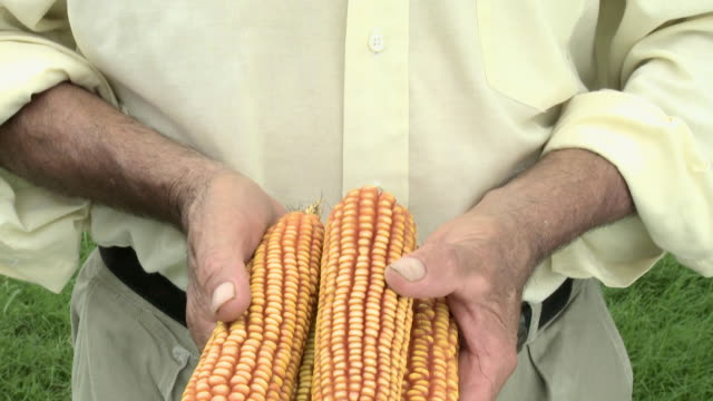 farmer holding corn cobs - four objects stock videos & royalty-free footage