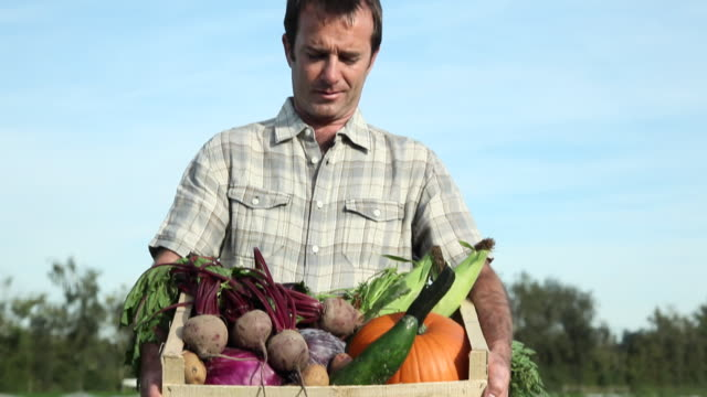 vídeos de stock, filmes e b-roll de farmer holding crate of fresh vegetables - engradado