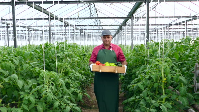 4K Farmer holding crate with fresh vegetables in greenhouse