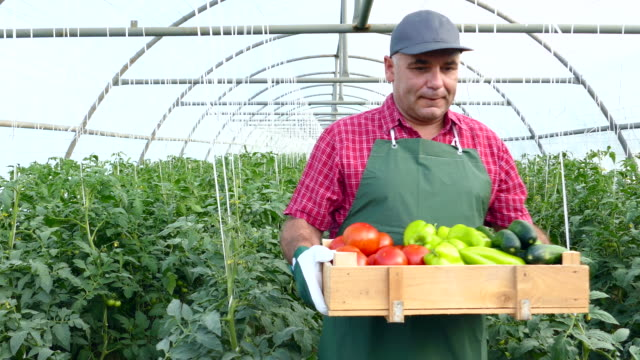 4k farmer holding crate with vegetables in greenhouse - crate stock videos and b-roll footage