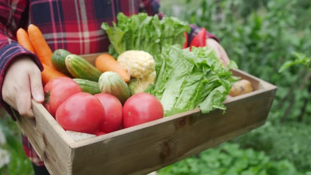 farmer holding fresh vegetables - lettuce stock videos & royalty-free footage