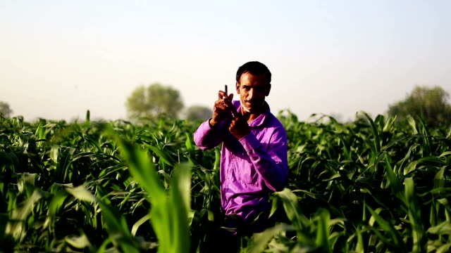 farmer holding mobile phone - sorghum stock videos & royalty-free footage