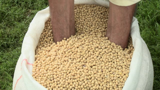farmer holding soybeans - abundance stock videos & royalty-free footage