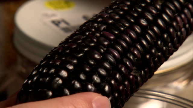 a farmer holds an ear of purple corn with black kernels. - corn cob stock videos & royalty-free footage