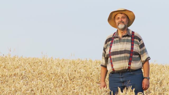 hd: farmer in a wheat field - hängslen bildbanksvideor och videomaterial från bakom kulisserna