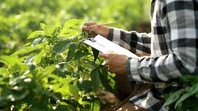 vídeos de stock e filmes b-roll de farmer in agriculture plants nursery fields - controlo de qualidade