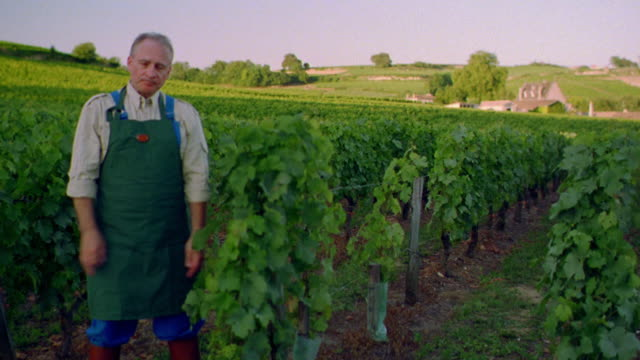 stockvideo's en b-roll-footage met pan portrait farmer in apron standing in vineyard crossing + uncrossing arms / st. emilion, france - frankrijk