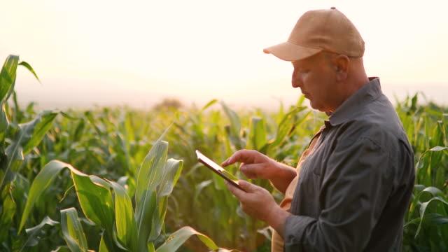 landwirt im maisfeld mit tablette - bauernberuf stock-videos und b-roll-filmmaterial