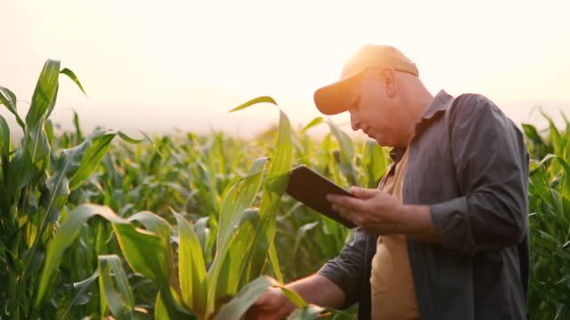 vídeos de stock, filmes e b-roll de fazendeiro no campo de milho com tabuleta - milho