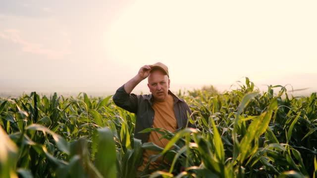 Farmer in corn plant field