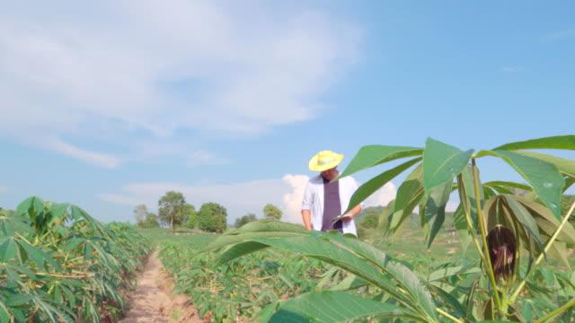 Farmer in Plantation using a digital tablet Quality inspection in cassava field, Smart Farming Concept