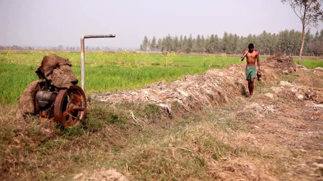 landwirt auf dem gebiet der weizen - nackter oberkörper stock-videos und b-roll-filmmaterial