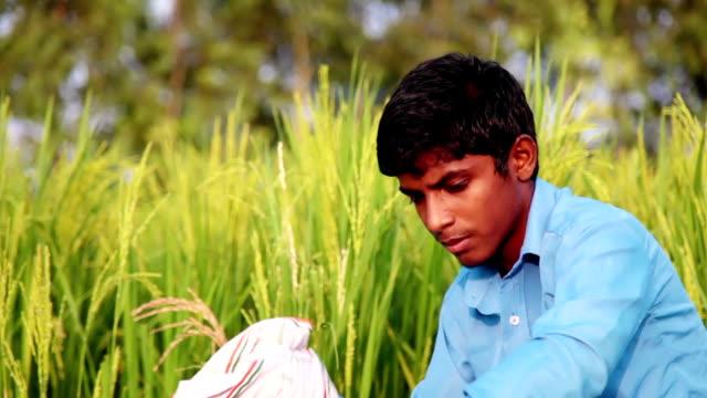 Farmer in the green field
