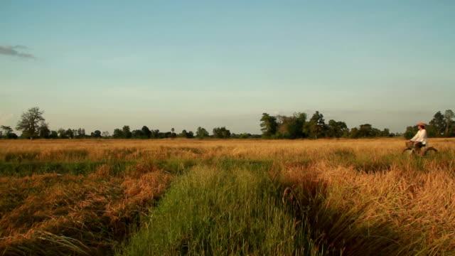 farmer im reisfeld - wiese stock-videos und b-roll-filmmaterial