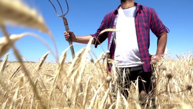農家の小麦のフィールド - 農学者点の映像素材/bロール
