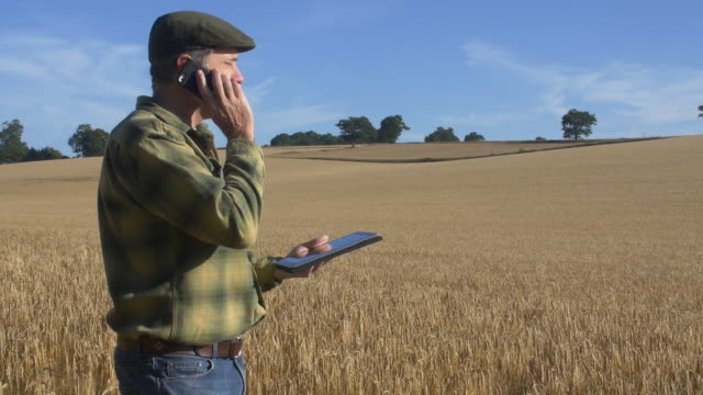 farmer in wheatfield using digital tablet computer and mobile phone - farm worker stock videos and b-roll footage