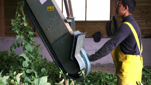 ホップ分岐をマシンに挿入する農家 - 地理的地域 国点の映像素材/bロール