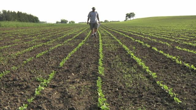 WS TU SLO MO Farmer inspecting organic soybean field / Columbus, Wisconsin, USA