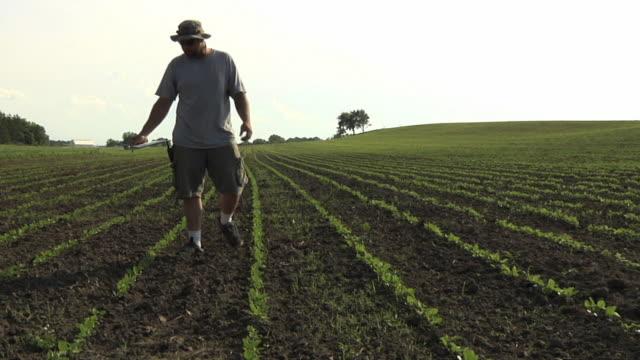 WS ZO TD SLO MO Farmer inspecting organic soybean field / Columbus, Wisconsin, USA