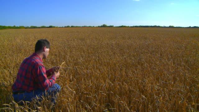 vidéos et rushes de agriculteur sa ses cultures - seulement des jeunes hommes