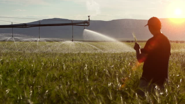 farmer inspects his crops - irrigation equipment stock videos & royalty-free footage