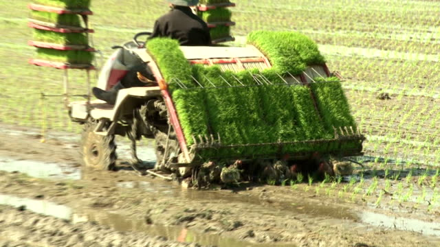 A farmer is driving rice-planting machine