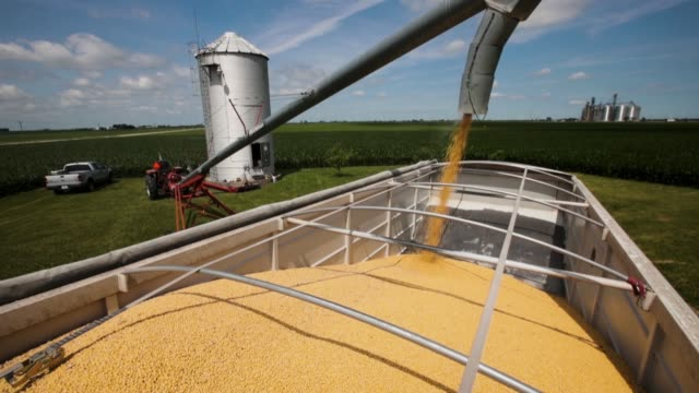 farmer john duffy loads soybeans from his grain bin onto a truck before taking them to a grain elevator on june 13 2018 in dwight illinois us soybean... - soya bean stock videos & royalty-free footage