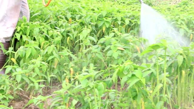 Farmer kills weed spraying pesticides in tropical field