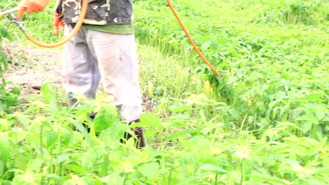 farmer kills weed spraying pesticides in tropical field - weeding stock videos & royalty-free footage