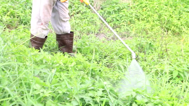 farmer kills weed spraying pesticides in tropical field - spraying stock videos and b-roll footage