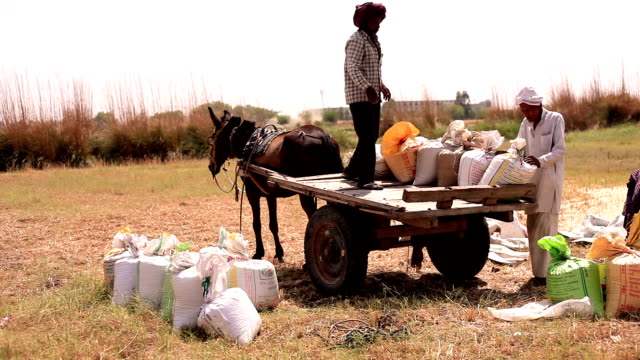 farmer loading cart after wheat harvesting - developing countries stock videos & royalty-free footage