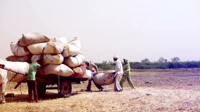 farmer loading husk in to the cart after wheat harvesting - carrying stock videos & royalty-free footage