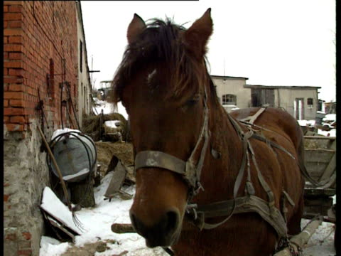 A farmer loads horsedrawn cart with straw in rural Hungary 1990s