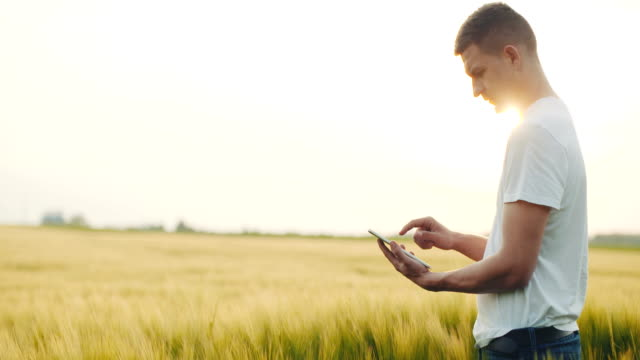 Farmer looking at his field of rye and using his digital tablet