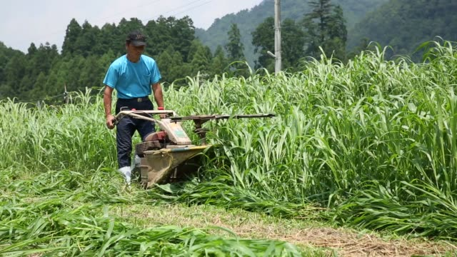 A farmer Minoru Terao uses a mower to cut hay cattle feed at field in Yabu City Hyogo Prefecture Japan on Saturday August 1 2015 Shots CU of grass...