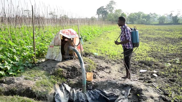 farmer mixing pesticides to spray on a cucumber agriculture farm to kill insects, in barpeta, india on 11 december 2020. indian farmers spray a... - vegetable stock videos & royalty-free footage