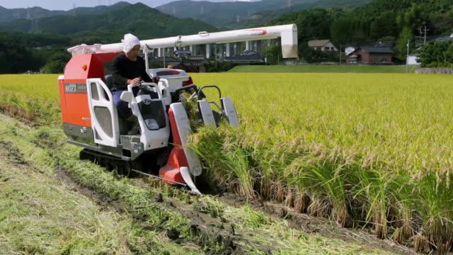 Farmer on combine working, rice harvest